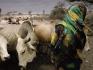 Nei pressi di uno dei pozzi nella zona di Erdar, una donna Borana aspetta il suo turno per portare la mandria all'abbeverata.