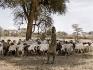 Un giovane pastore Borana.