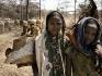 Bambine Borana conducono i vitelli alla ricerca di pascolo nei campi bruciati dall'aridità.